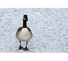 Canada Gooose on Ice Photographic Print