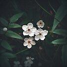 Flowers by James McKenzie