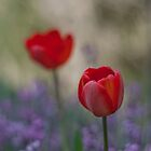 Double Tulip by Karen Anderson