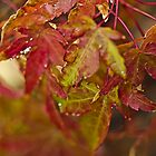 Maple Leaves In The Rain by Diane Schuster