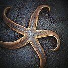 You're a STAR! by Terri~Lynn Bealle