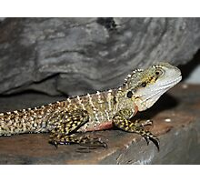 Lizard Photographic Print