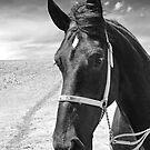 Percheron Classic by Al Bourassa