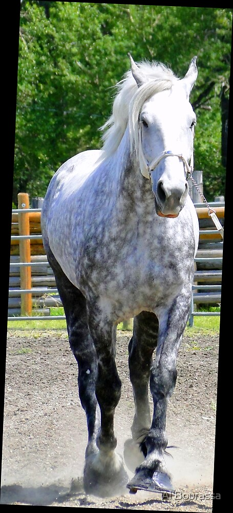 The Old Gray Mare by Al Bourassa