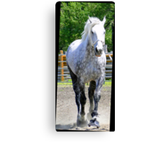 The Old Gray Mare Canvas Print