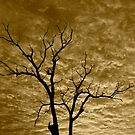 Tree Study Sepia by Coralie Plozza
