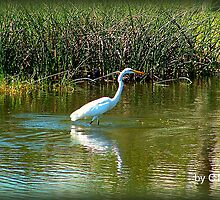 FLORIDA'S GREAT WHITE EGRET by Claire Moreau