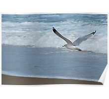 Nags Head, flying free Poster
