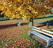 White Bench and Fallen Leaves by Paul Harrison