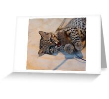 Young Andean Mountain Cat Greeting Card