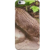 Random Andean Mountain Cat iPhone Case/Skin