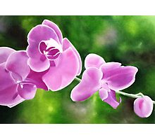 Tropical Allure - Floral artwork Photographic Print