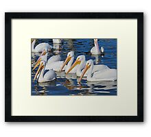 They're back again... Framed Print