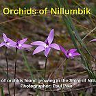 Orchids of Nillumbik by Paul Piko