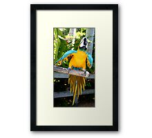 Playful Macaw Framed Print