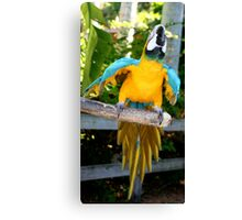 Playful Macaw Canvas Print