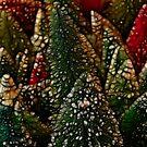 Oh Bristle Tree Oh Bristle Tree by jeffrae