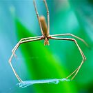 Net Casting Spider by Penny Smith