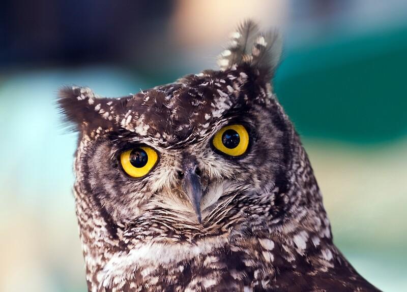 Owl Baby Gifts Australia : Quot owl framed prints by bidkev redbubble