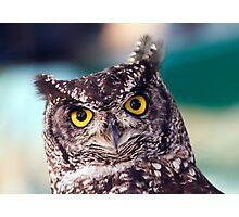 Owl Photographic Print