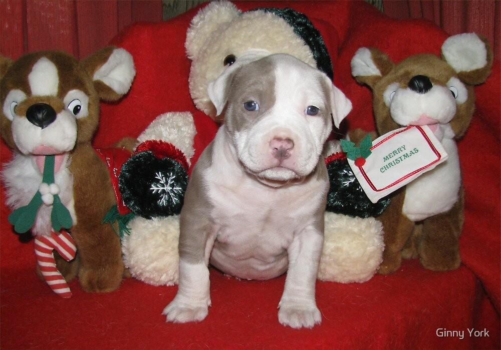Merry Christmas by Ginny York