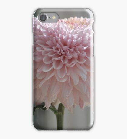 Soft and Pink Crysanthemum iPhone Case/Skin