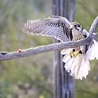 """""""My sights or on!"""" by Sherry Pundt"""