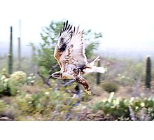 """""""Fly by"""" Photographic Print"""