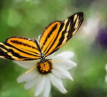 The Butterflies Calendar  - Photography by Lois Bryan by Lois  Bryan