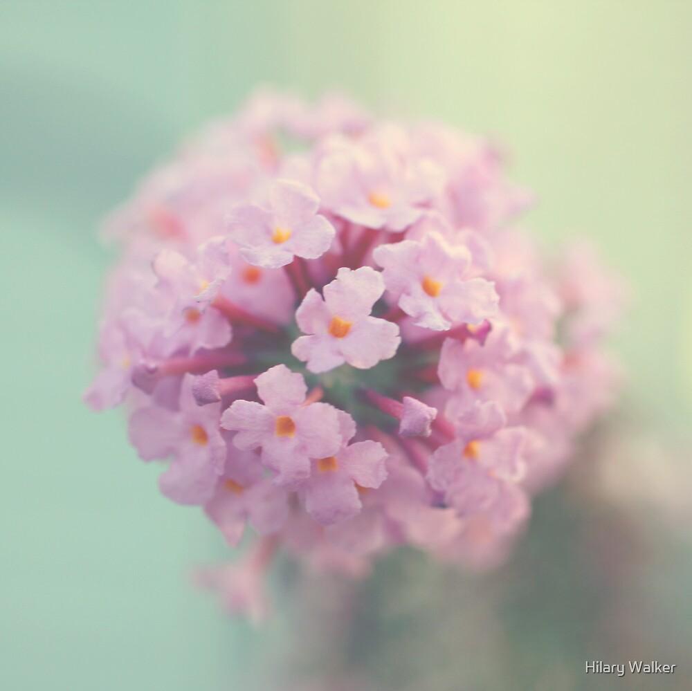 Butterfly Bush by Hilary Walker