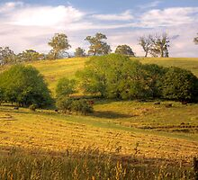 The Cows Come Home - Mount Torrens, South Australia by Mark Richards