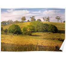 The Cows Come Home - Mount Torrens, South Australia Poster
