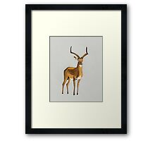 Ilustration art - Money antelope Framed Print