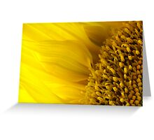 Sunflower in bloom  Greeting Card