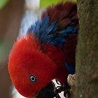 """""""Dinner on the Side"""" - Red Parrot by Sophie Lapsley"""