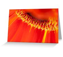 Gerbera wonderland - Canon EOS 5D Mark II Greeting Card