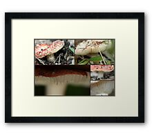 """"""".My what big teeth you have"""" Framed Print"""