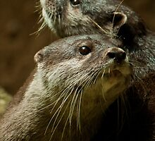 """Just Good Friends"" - Otters by Sophie Lapsley"
