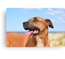 Gemma Dog Canvas Print