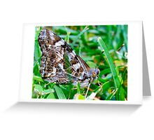Butterfly experience Greeting Card
