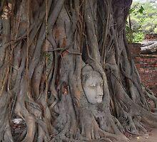 Buddha in Wat Mahathat Thailand by Ren Provo