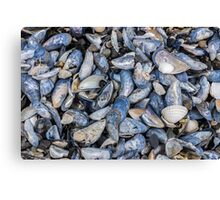 Mussel Beach Canvas Print