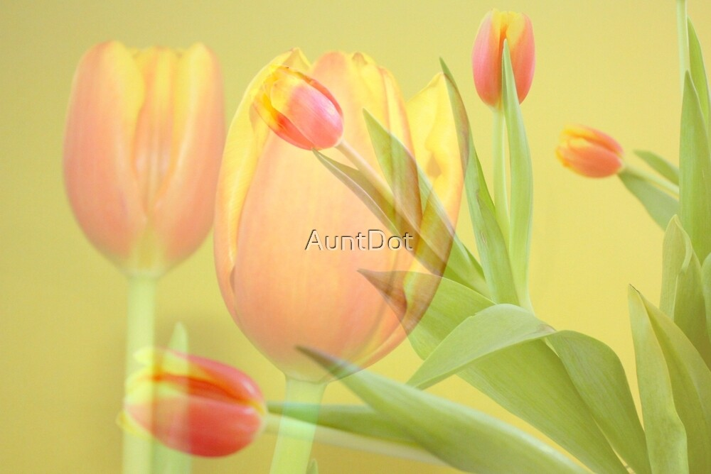 Tulip Time by AuntDot