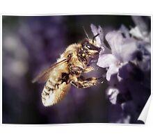 Lavender scent Poster