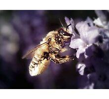 Lavender scent Photographic Print