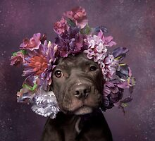 Flower Power, Dax by Sophie Gamand