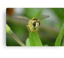 Head on Hoverfly Canvas Print
