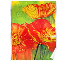 Hot Poppies Poster