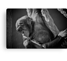 Baby Chimp Canvas Print