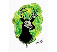 Stag Skull Photographic Print
